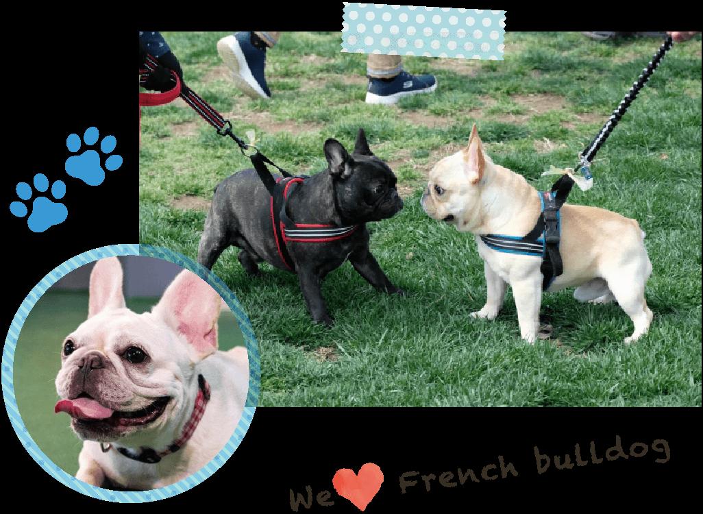 we love french bulldog イングリッシュブルドッグとフレンチブルドッグ
