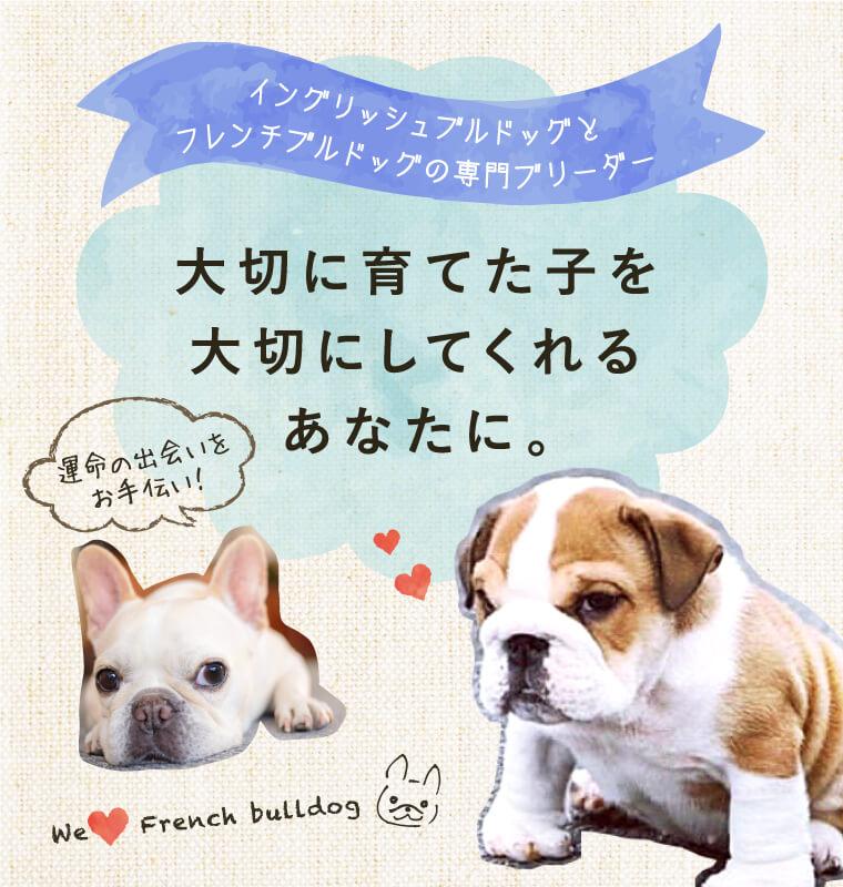 ブリーダー ブルドック 店舗概要|埼玉県加須市でブルドッグブリーダー、子犬販売ならBULLHOUSE INOUE